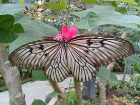 Kemenuh Butterfly Park Paket Activity Hotel Murah Di Bali Hotel Domestik Paket Rupiah Murah Dan Berkelas